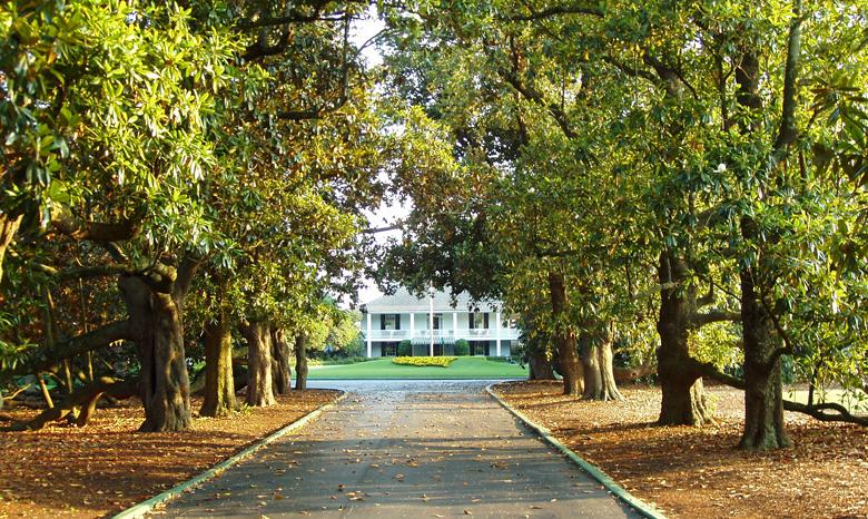Magnolia Lane - Augusta