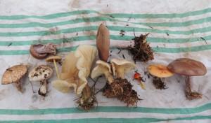 fungi feature