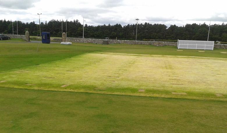 grass blog feature 11